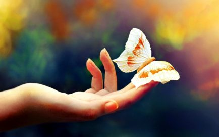 tf76_beautiful-butterfly-hd-wallpaper-342881