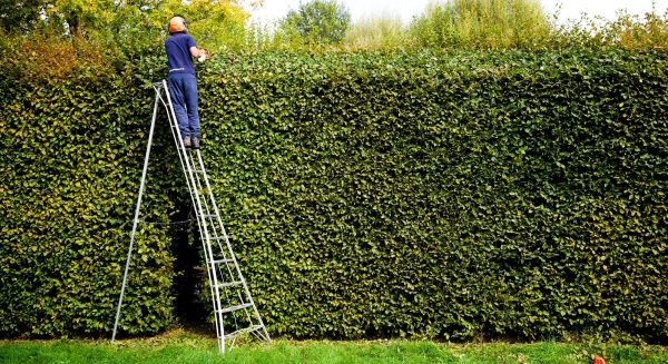 c_tf83_the-12-niwaki-en-pro-tripod-ladder-essential-for-hedging-contractors-and-tree-surgeons