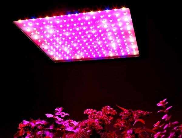 apollo-lampara-led-luz-horticultura-invernadero-vegetal-900w-d_nq_np_897911-mlm20670135693_042016-f-d