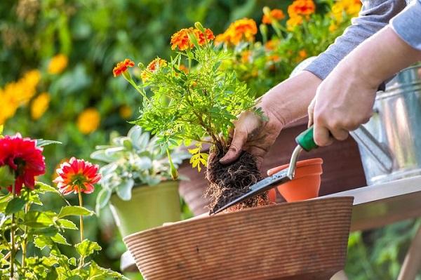 consejos-para-regar-un-jardin-con-flores