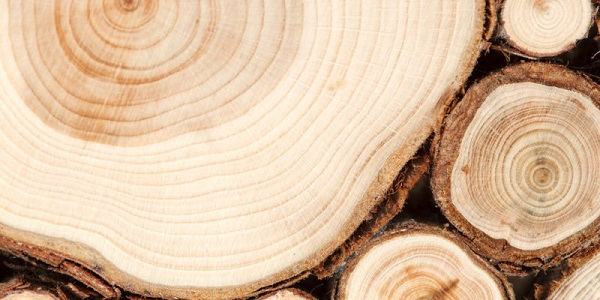 madera-4-e1580502519574